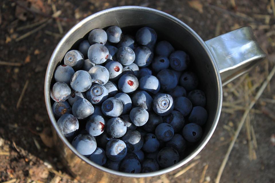 blueberry-834623_960_720
