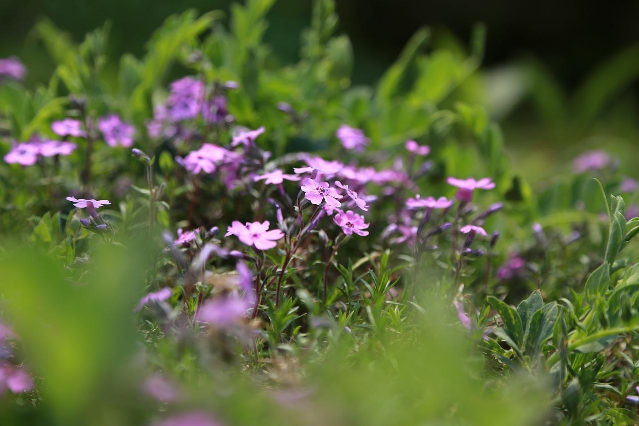flowers-3313545_1280
