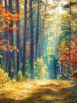 Wald3